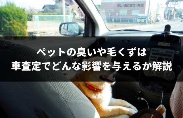 ペットは車査定に悪影響になる!1円も減額されないための裏技を専門家がこっそり伝授