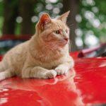 車の上に乗る猫